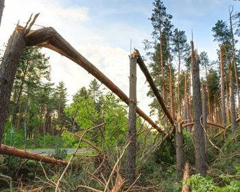A Framework for Changes that Could Disrupt the Forest Industry