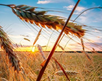 Crowdfunding for Agriculture: Investing in Farmland