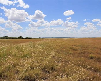 Excellent Hunting Destination in Central Texas