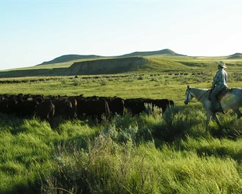 Holistic Planned Grazing, Explained