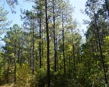 Premier & Investment Grade Timberland Opportunity