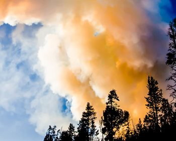Pulse: Aggressive Logging and Thinning Does Not Preclude Wildfires