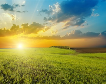 Pulse: Strong Returns on Farmland Expected to Continue