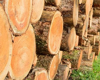 Questions to Ask When Screening Wood Baskets and Timber Markets