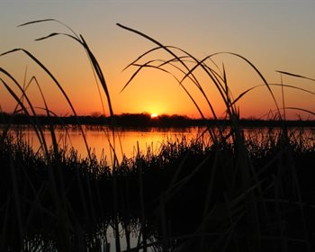 Understanding Wetlands Reserve Easements
