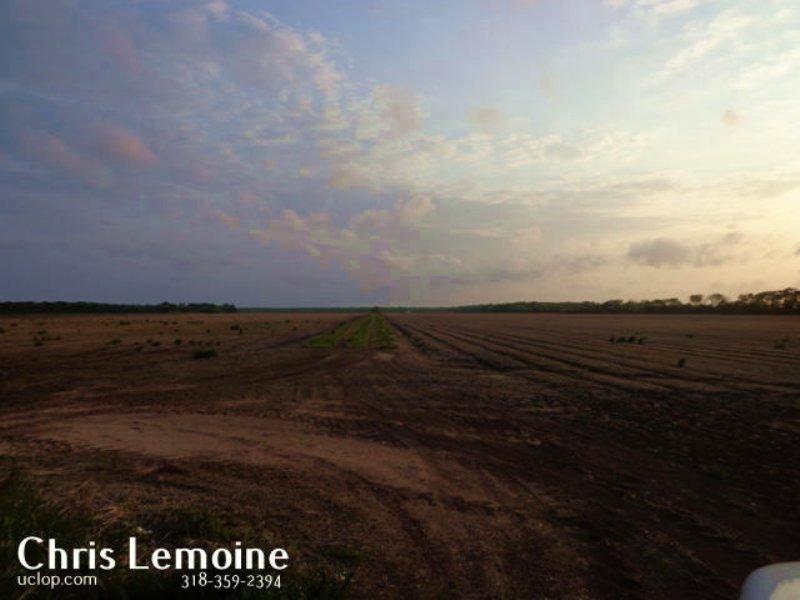 Sealed Bid Farmland Auction : Lebeau : Saint Landry Parish : Louisiana