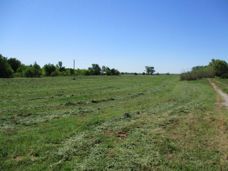 81+/- Ac Prime Deer Hunting : Argonia : Sumner County : Kansas