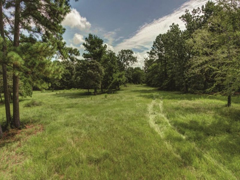 Auction - Country Home & 25± Acres : Navasota : Grimes County : Texas