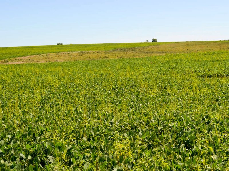 800± Acre Land Auction : Wells : Ottawa County : Kansas