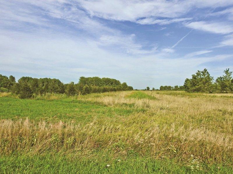 Waterfront & Rec Land Auction : Murdock : Douglas County : Illinois