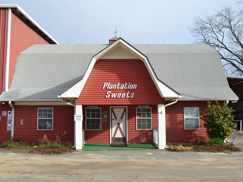 Vidalia Onion Growing & Packing : Cobbtown : Tattnall County : Georgia