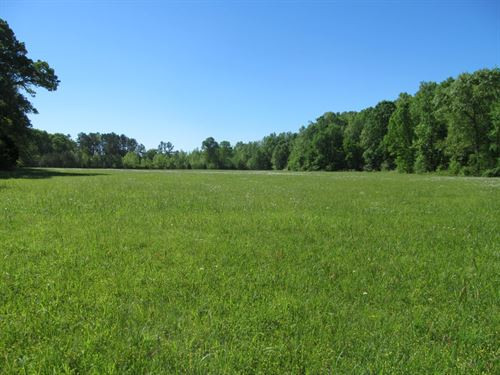 4 Land Tracts At Auction : Hohenwald : Lewis County : Tennessee