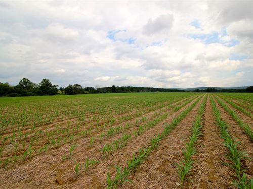 54+/- Acres Prime Farmland : Bloomsburg : Columbia County : Pennsylvania
