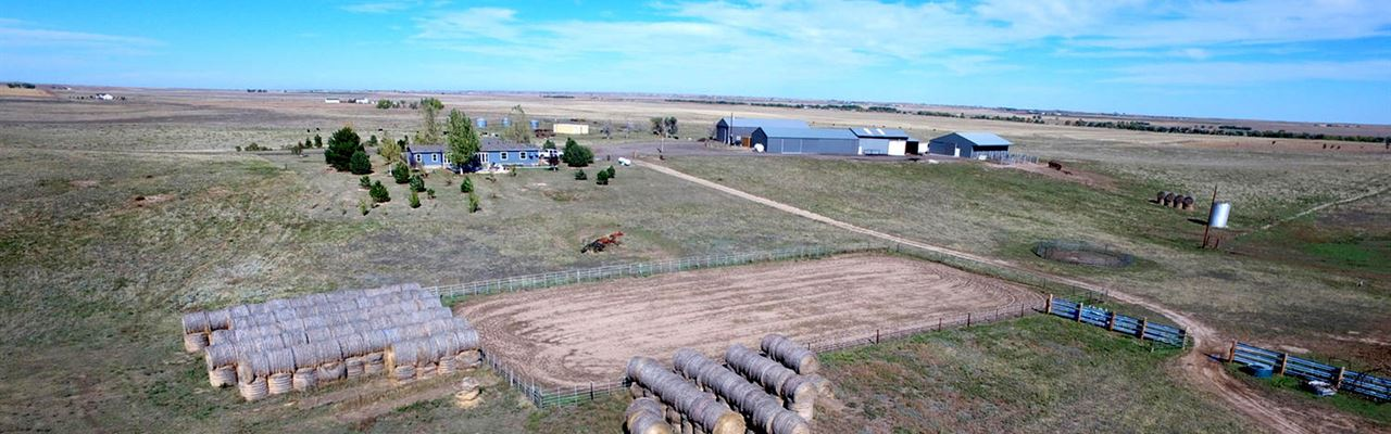 Windance Bison Ranch Auction : Bennett : Arapahoe County : Colorado