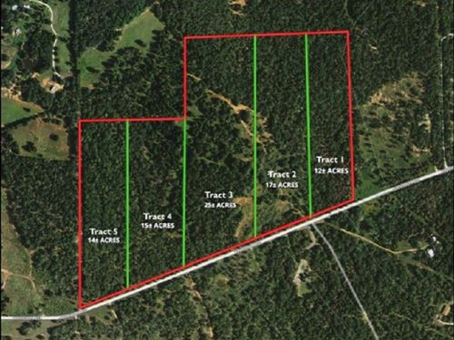 Bastrop County Land Auction : Paige : Bastrop County : Texas