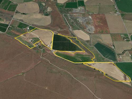 Adams County Farm : Othello : Adams County : Washington