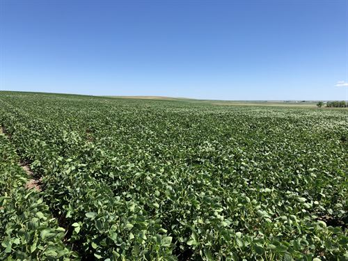 Walworth County, Sd Farm Land : Glenham : Walworth County : South Dakota