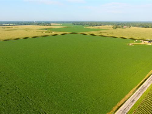 Land Auction - 4810 Acres-85 Tracts : Ewing : Franklin County : Illinois