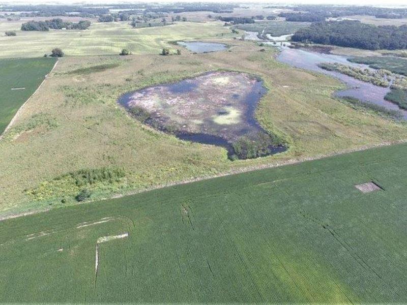 Willmar MN 40 Acres Hunting Land : Willmar : Kandiyohi County : Minnesota