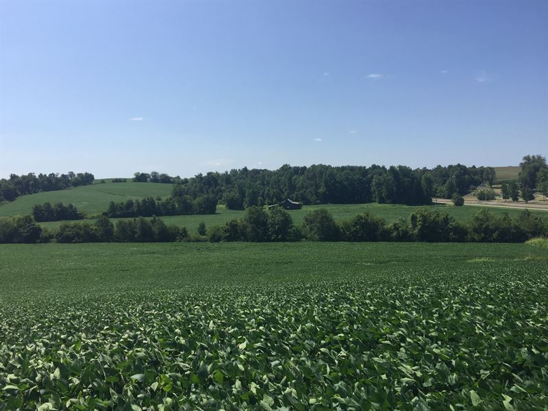 Farm Kentucky Online Only Auction : Sebree : Webster County : Kentucky