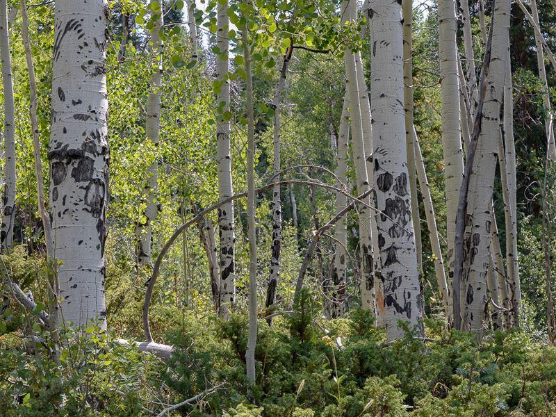 Colorado Mountain Land, Senior : Winter Park : Grand County : Colorado