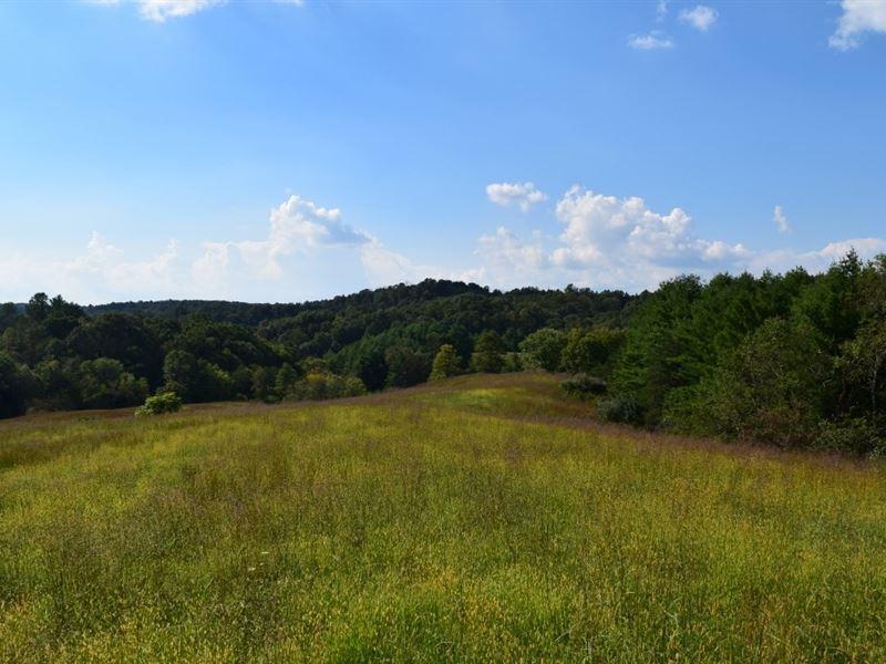 Land Auction Farm Land in Floyd VA : Floyd : Floyd County : Virginia