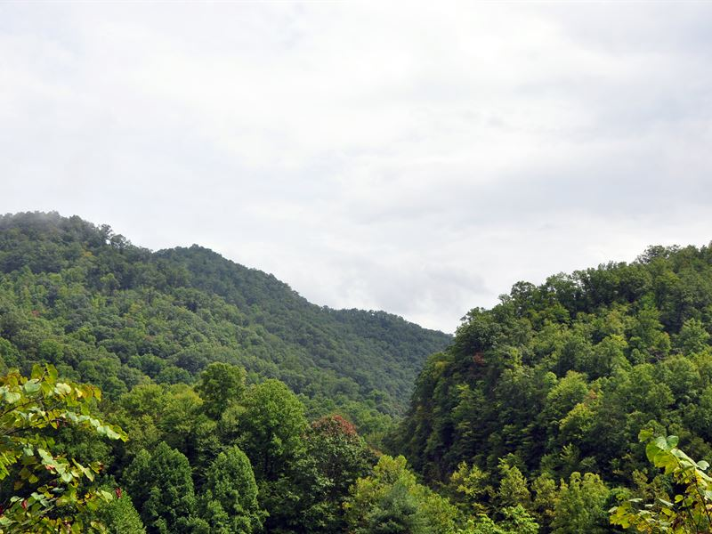 Premiere Hunting / Timberland : Marytown : McDowell County : West Virginia