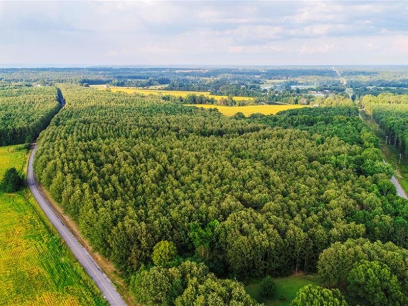 Timberland Auction : Dutton : Jackson County : Alabama