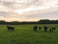 Acreage Auction in Appomattox VA : Appomattox : Appomattox County : Virginia