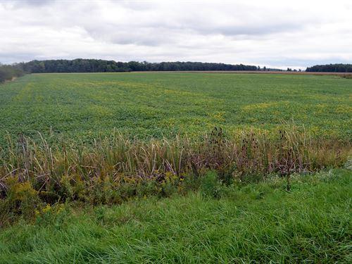 Farmland Auction In Ohio : Mark Center : Defiance County : Ohio