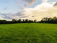 Farmland Auction : Appomattox : Appomattox County : Virginia