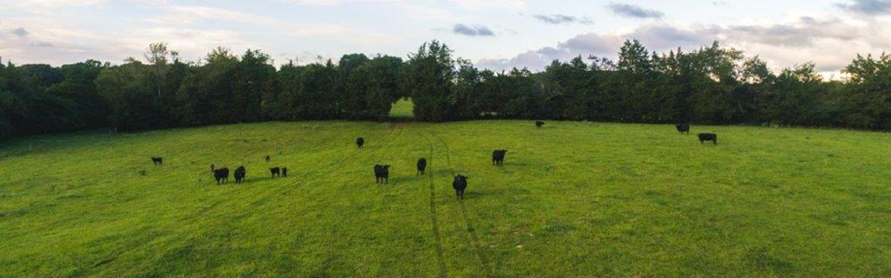 Farmland Auction : Appomattox : Virginia