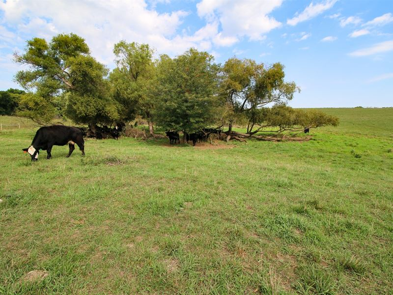 Kansas City Pasture Land Auction : Kansas City : Wyandotte County : Kansas