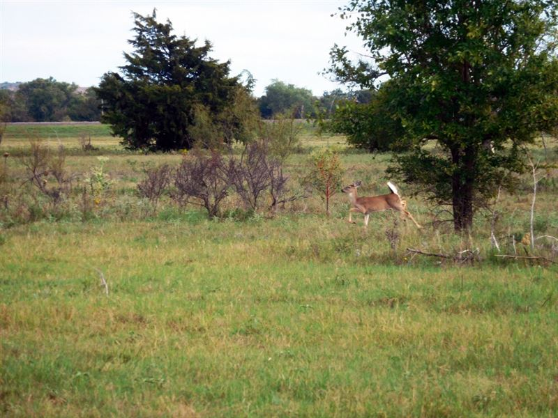 Productive Farmland & Hunting Land : Carter : Beckham County : Oklahoma