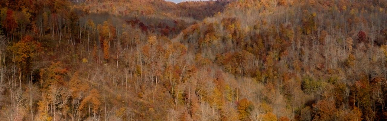Absolute Auction 584 Acres : Flat Lick : Knox County : Kentucky
