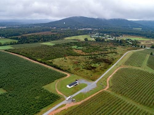 7K Farms High Density Apple Orchard : Rustburg : Campbell County : Virginia