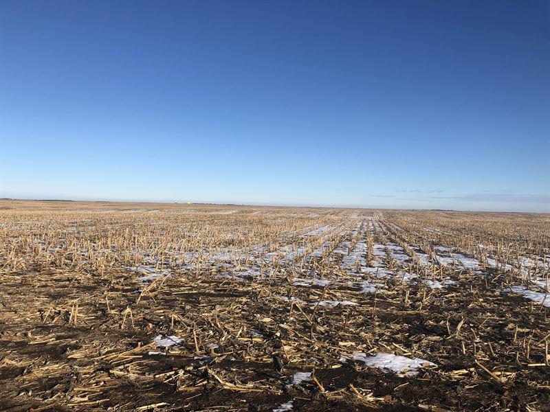 Faulk County Farm Land Auction : Faulkton : Faulk County : South Dakota