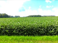 Land Auction, 314+/- Ac,, 4 Tract : Francesville : White County : Indiana