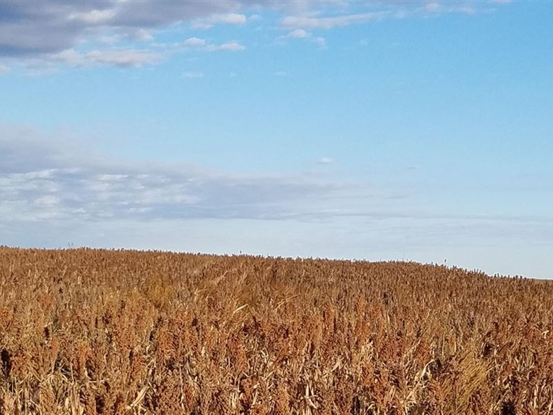 Highly Productive Farm Land : Mount Hope : Reno County : Kansas