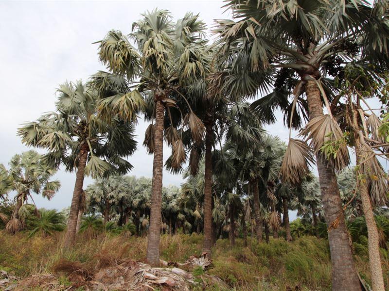 607+/- Ac On Pine Island, Fl : Bokeelia : Lee County : Florida
