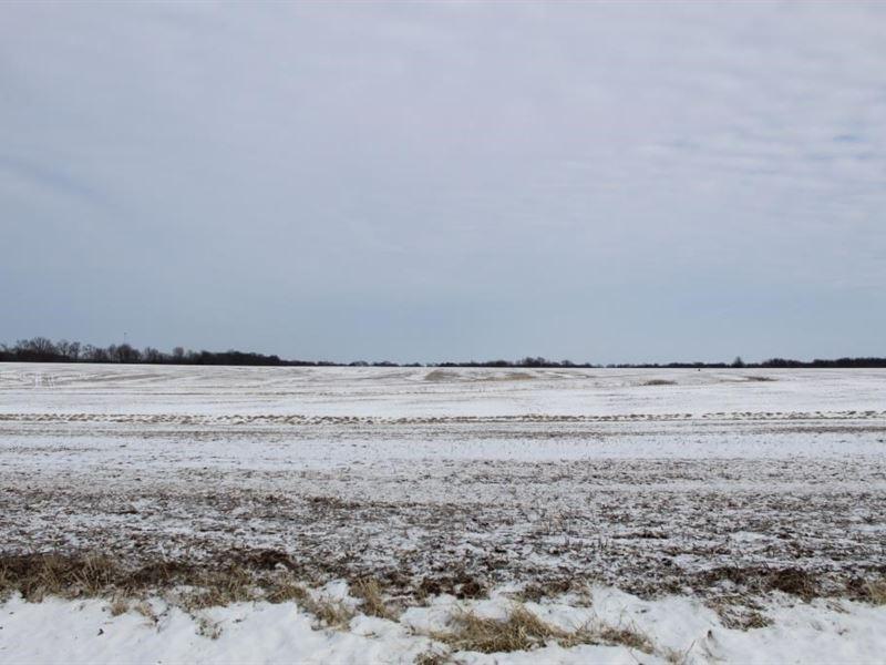 Tillable Row Crop Farm Land Auction : Hallsville : Boone County : Missouri