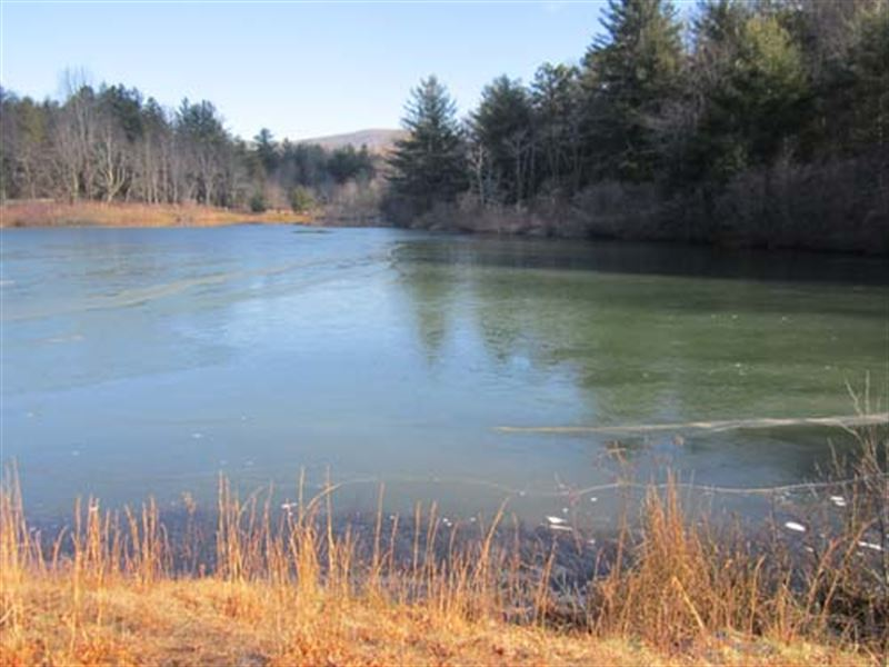 Auction, Property 1122 : Scaly Mountain : Macon County : North Carolina