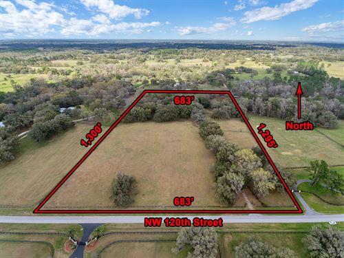 20 Acre Equestrian Farm & Home : Reddick : Marion County : Florida