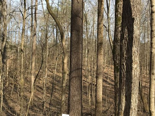 Approx 65 Acres / 416,000 BF Timber : Glens Fork : Russell County : Kentucky
