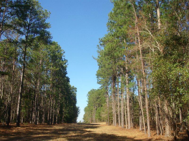 23,311 Tons Of Timber : Soperton : Treutlen County : Georgia