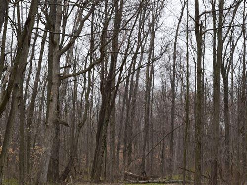 Land Auction, Thurs, May 16 6 30Pm : Republic : Seneca County : Ohio