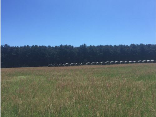 Auction 41 Acres Double Wide Mobile : Luverne : Crenshaw County : Alabama