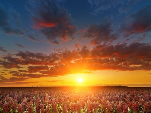 470 Acres Cropland & Minerals : Felt : Cimarron County : Oklahoma