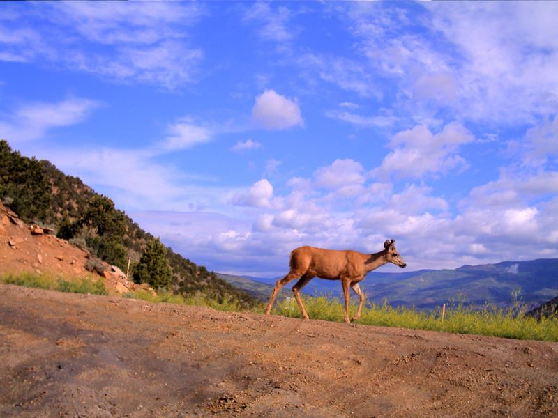 86 Acre Sweetwater Valley Property : Dotsero : Eagle County : Colorado
