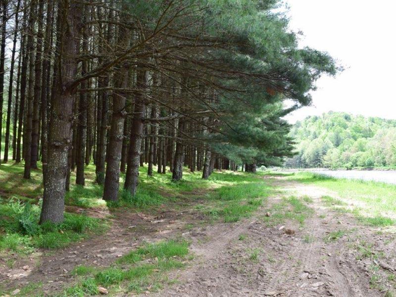 Recreational Land Auction Grayson : Galax : Grayson County : Virginia